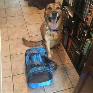 Collapsable soft sided pet carrier
